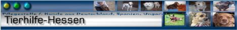 Tierhilfe-Hesse, Hunde suchen ein Zuhause