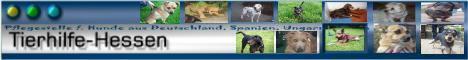 Tierhilfe Hessen Hunde suchen ein Zuhause